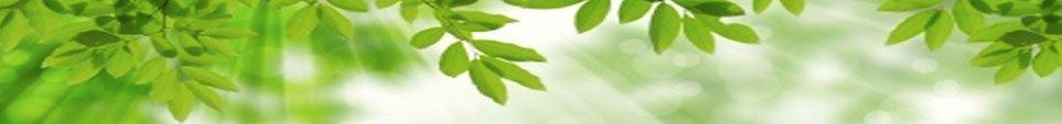 Velkommen til din personlige online Herbalife Wellness-vejleder